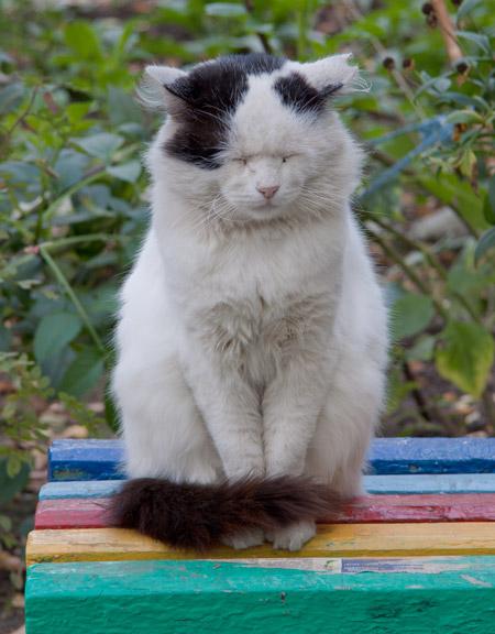 Уличный кот Гриша